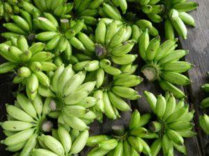 Resistente Stärke grüne Bananen