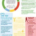 Energiebedarf Kalorienverbrauch Infografik fiinuh.de